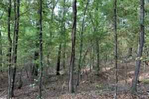 Mulberry Creek Hunting and Timber Tract in Autauga, AL (14 of 39)