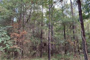 Mulberry Creek Hunting and Timber Tract in Autauga, AL (35 of 39)