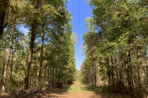 Mulberry Creek Hunting and Timber Tract in Autauga, AL (23 of 39)