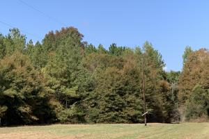 Mulberry Creek Hunting and Timber Tract in Autauga, AL (36 of 39)