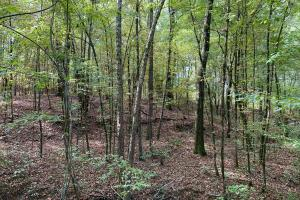 Mulberry Creek Hunting and Timber Tract in Autauga, AL (3 of 39)