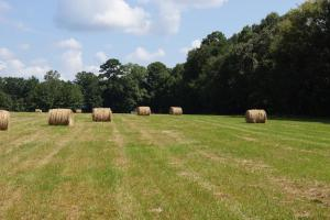 Improved Pasture With Homesite Near Forkville, MS - Scott County MS
