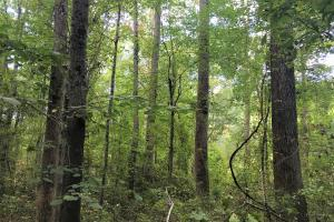 Private Wooded Home Site - Pickens County SC