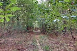 Louisville Land Opportunity  - Winston County MS