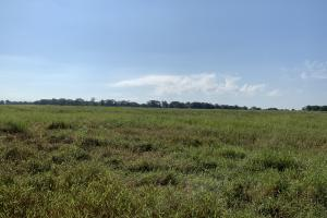 Irrigated Farmland With Prime Hunting on Turkey Creek - Franklin Parish LA