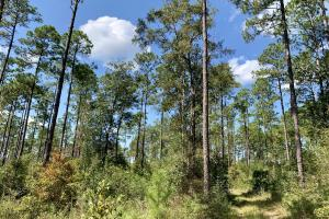 Cotton Creek Big Timber and Hunting Investment (10 of 25)