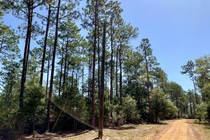 Cotton Creek Big Timber and Hunting Investment (9 of 25)