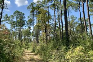 Cotton Creek Big Timber and Hunting Investment (8 of 25)