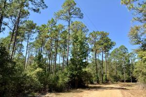 Cotton Creek Big Timber and Hunting Investment - Escambia County, FL