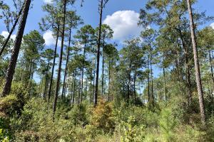 Cotton Creek Big Timber and Hunting Investment (17 of 25)