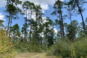 Cotton Creek Big Timber and Hunting Investment (6 of 25)
