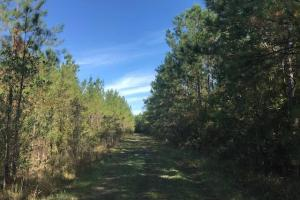 Plantersville Timber and Rec  - Georgetown County, SC