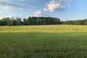 Gently Rolling Pasture/Development Land Inside City Limits of Quitman - Clarke County MS