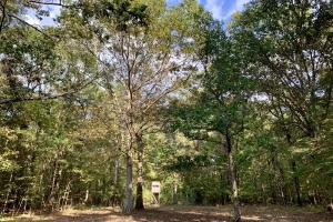 The Tensaw Holley Creek Tract in Baldwin, AL (30 of 60)
