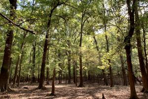 The Tensaw Holley Creek Tract in Baldwin, AL (10 of 60)