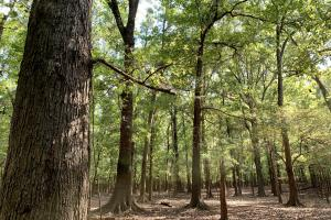 The Tensaw Holley Creek Tract in Baldwin, AL (9 of 60)