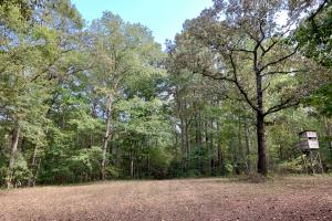 The Tensaw Holley Creek Tract in Baldwin, AL (6 of 60)