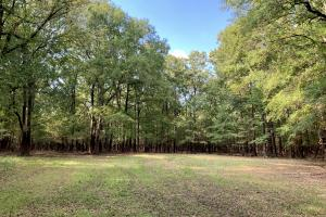 The Tensaw Holley Creek Tract in Baldwin, AL (3 of 60)