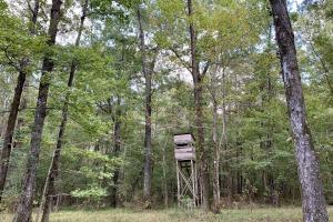 The Tensaw Holley Creek Tract in Baldwin, AL (4 of 60)
