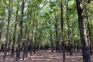 The Tensaw Holley Creek Tract in Baldwin, AL (42 of 60)