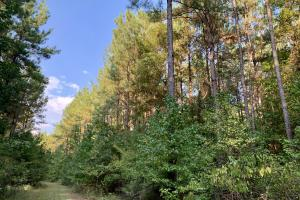 The Tensaw Holley Creek Tract in Baldwin, AL (37 of 60)
