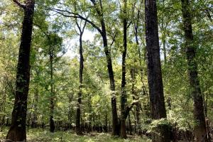 The Tensaw Holley Creek Tract in Baldwin, AL (14 of 60)
