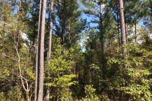 Paris, Ms Small Acreage and Homesite - Lafayette County MS