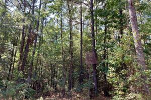 Tensaw Homesite & Hunting Retreat in Baldwin, AL (6 of 9)