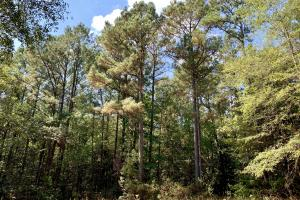 Tensaw Homesite & Hunting Retreat in Baldwin, AL (8 of 9)
