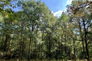 Tensaw Homesite & Hunting Retreat in Baldwin, AL (2 of 9)