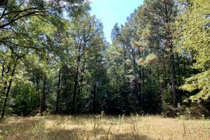 Tensaw Homesite & Hunting Retreat in Baldwin, AL (3 of 9)