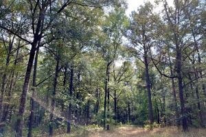 Tensaw Homesite & Hunting Retreat in Baldwin, AL (5 of 9)