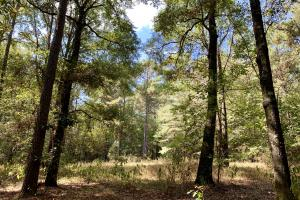 Tensaw Homesite & Hunting Retreat in Baldwin, AL (9 of 9)