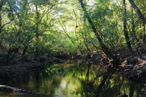 Black Creek Recreational Bottomland  - Lamar County MS