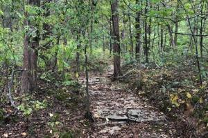 Ideal hunting tract close to Bowling Green - Warren County KY