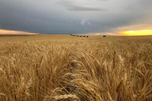 Cropland & Grassland For Sale in Lincoln County, CO - Lincoln County CO