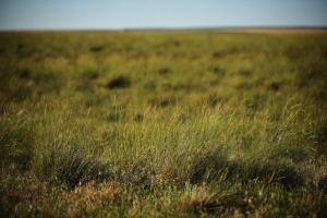 Expired CRP For Sale in Kit Carson County, CO - Kit Carson County CO