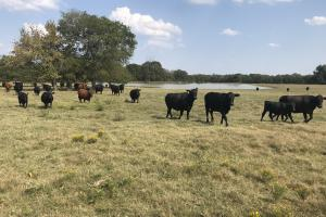 Okolona Pasture or Development - Chickasaw County MS