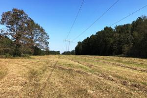 Bogue Homa Hunting and Timber Tract - Jones County MS