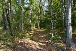 Ivy Creek East Tract in Autauga, AL (4 of 22)