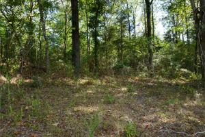 Ivy Creek East Tract in Autauga, AL (9 of 22)
