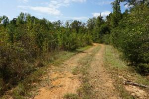Ivy Creek East Tract in Autauga, AL (10 of 22)