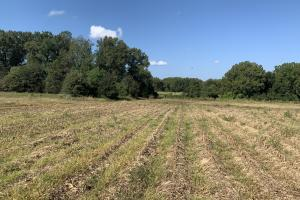 Irrigated Farmland With Hunting and Camp - Franklin Parish LA
