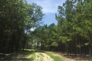 Springvale Recreational Tract with Pond and Homesite in Kershaw, SC (19 of 26)