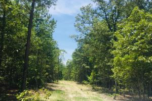 Springvale Recreational Tract with Pond and Homesite in Kershaw, SC (24 of 26)