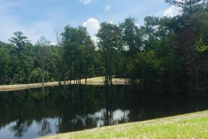 Springvale Recreational Tract with Pond and Homesite in Kershaw, SC (6 of 26)
