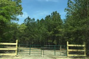 Springvale Recreational Tract with Pond and Homesite in Kershaw, SC (2 of 26)