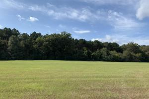Beautiful Rolling Pastureland Near Yazoo City - Yazoo County MS