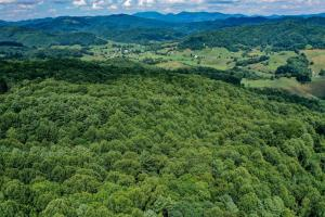 Watauga Hunting and Timber Tract - Watauga County NC