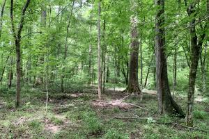 Yantley Creek Hunting and Timber Investment in Choctaw, AL (17 of 20)